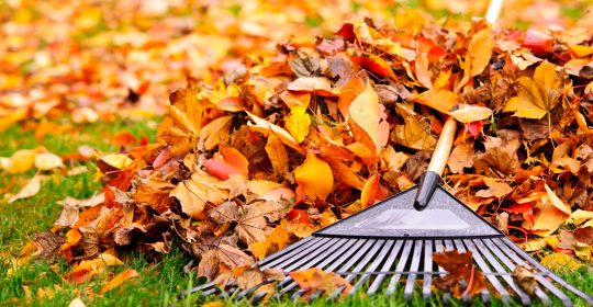 Fall Allergies: Seasonal Tips to End the Itch